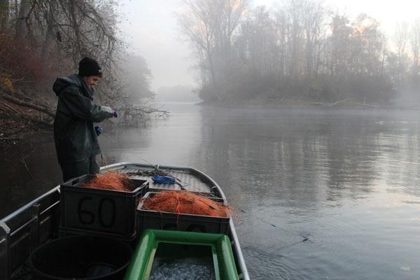 (Foto: Fischereibetrieb Dr. Kuhn)